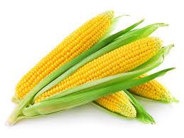 corn-image